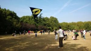 Kite in park