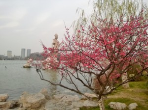 Spring is almost here in Nanjing!