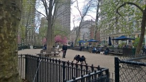 Izaak's favorite place in NYC-Madison Square Dog Park