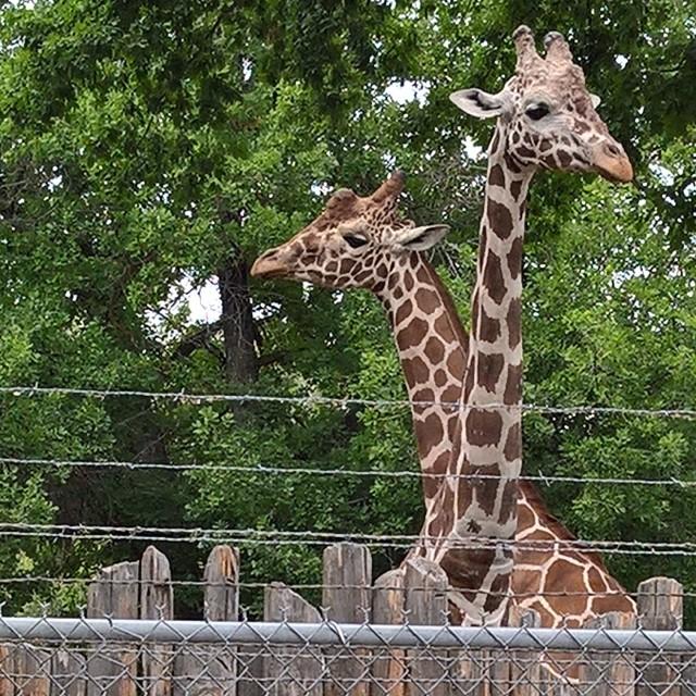 Boise zoo