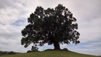The tree on the hill-perfect spot for weddings