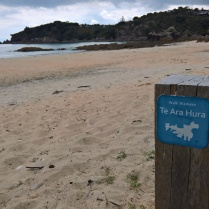 The start of Te Ara Hura walk on Waiheke